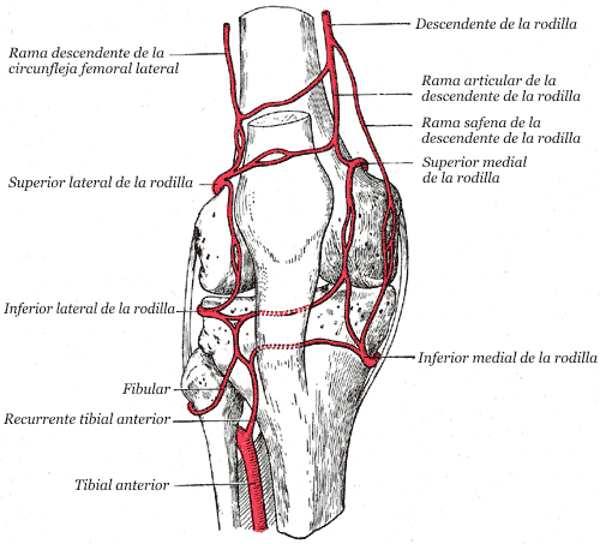 Embolización de la arteria geniculada para el dolor por artrosis de rodilla